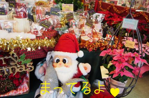 クリスマス花大